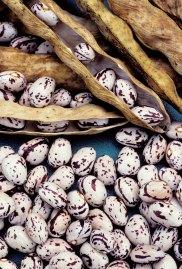 beans seed saving